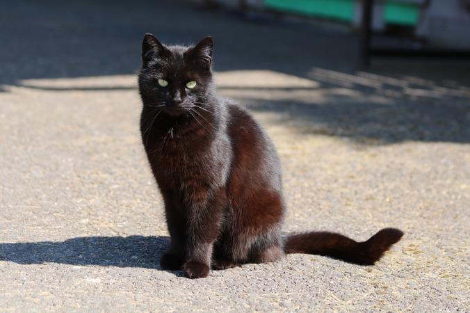 black-cat-3304871_960_720